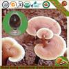 Organic Mushroom Extract Powder With Polysaccharide 20%
