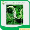 Factory supply 2.5% Triterpenoid Glycosides HPLC Black Cohosh P.E.