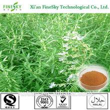 High quality food grade rosemary extract, rosemary leaves, rosemary