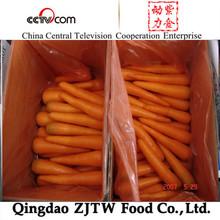 wholesale china fresh vegetables bulk carrot seeds