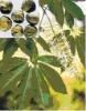 Natural Horse Chestnut Extract/escin 20% 30%