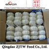 new crop garlic from China fresh garlic company