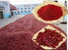 Main Product Dry Hot Tianying Chilli Pepper Pods