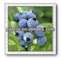 Bleuets. p. E.( n ° cas: 84082- 34- 8)