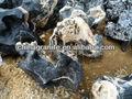 natural pedras paisagismo