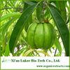 high quality garcinia cambogia extract 60% hydroxycitric acid
