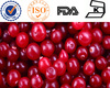 High Quality Cranberry Extract Plant Extract Powder
