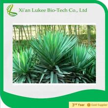 High quality yucca p.e yucca total saponins 45%