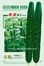 Spring-Treasure Cucumber Seeds vegetable