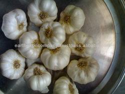 fresh garlic india
