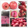 2014 Fuji apple exporter in china with good quality