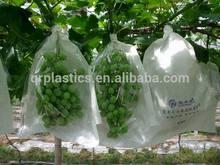 grape protection bag