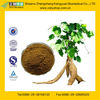 GMP Factory Supply Kudzu Root Extract