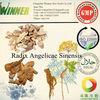 Dry Radix Angelicae Sinensis(Dang gui)