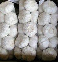 wholesale garlic price