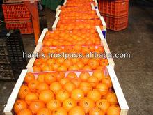 Fresh Citrus Fruits (Orange, Mamdarin, Clementine)
