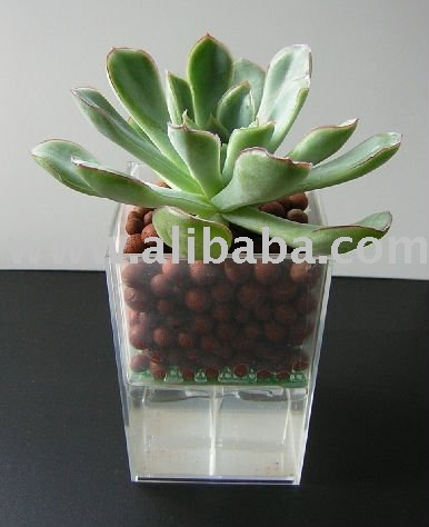 Small vase for Succulent/Cut flower