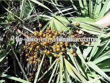palmetto extract