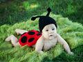 recién nacido del cuerpo sombrero de crochet cubierta de fotos prop de la mariquita traje