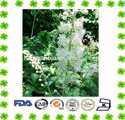 Black Cohosh Extract Powder Triterpenoid Glycosides 2.5%, 5%, 8%
