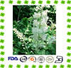 Black Cohosh Extract Powder Triterpenoid Glycosides 2.5%, 5%, 8%