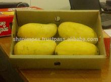 Pakistani Mango