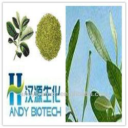 100% Natural Polyphenols 20% Yerba Mate Extract