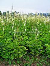 100% Organic Black Cohosh Extract, ISO, HACCP,HALAL,KOSHER