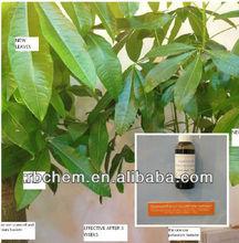 liquid organic seaweed extract plant growth regulator