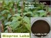 COLEUS root Extract, Forskolin