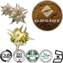 Hot Sale Tribulus Terrestris Seed Extract 20%,40%,60%,90% Saponins UV Free Sample