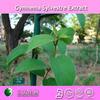 High quality gymnema sylvestre extract/ 25% Gymnemic acid