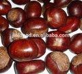 china frescas de castañas en conserva para la venta