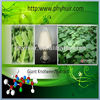 Giant knot weed extract/Herbal Extract trans-resveratrol 99