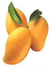 Seasonal fresh sweet mango fruits Exporter