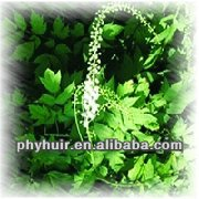 Extrato de black cohosh 2.5% no mercado 100kg