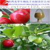 Natural acerola cherry extract/natural vitamin c powder