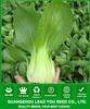 PK04 Xiaping f1 hybrid high quality heat resistant pakchoi seeds, hybrid vegetable seeds