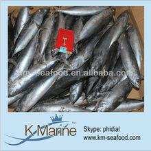 Hot Selling Fat Content 16%-18% Frozen Bonito Tuna Whole Fish