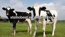 Bacillus Subtilis Probiotics for Ruminant
