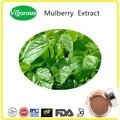 Extratodeervas mulberry extrato/extratosvegetais mulberry extrato/2014 novos produtos extrato de amoreira