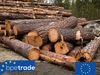 Aspen logs, round wood