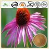 Herbal Anti-cancer Echinacea Purpurea Extract Powder