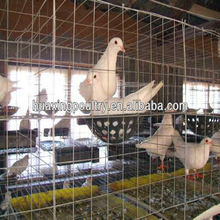 The New type and superior fancy pigeon cages for sale for poultry farm