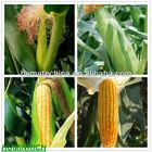 SH9010-48 65HA+25MFA+10K2O Potassium Humate Fulvic Agriculture