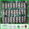 Chinese High Quality Fresh Natural Garlic