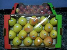 Portuguese Apples 2014
