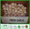 Chinese Fresh Red Garlic
