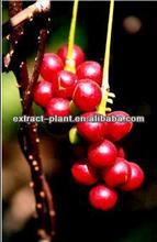 botanical powder Schisandra P.E/Schisandra P.E