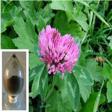 High quality RED CLOVER ISOFLAVONES powder 30%